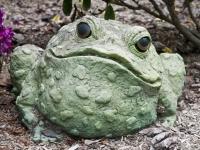 Freddy the frog