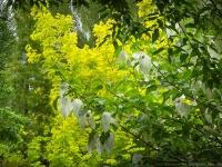 Spring in Albers Vista Gardens