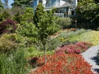 Biofiltration garden